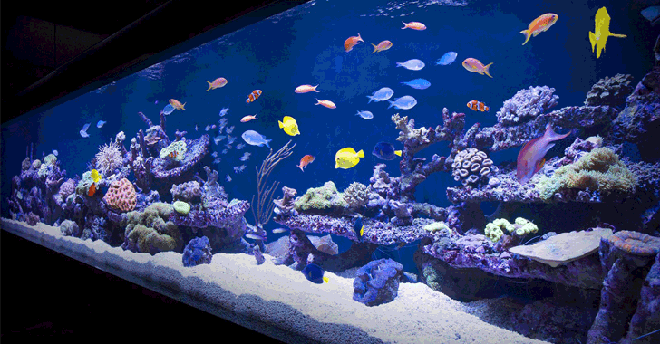 Casino Gets Hacked Through Its Internet Connected Fish Tank Thermometer